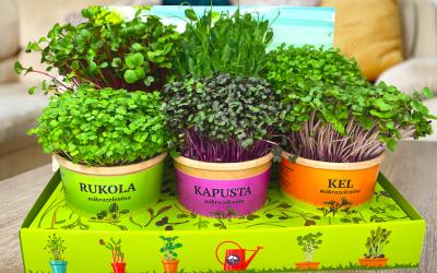 Predstavujeme vám úplnú novinku na Slovenskom trhu, Micro záhradku!